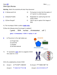 DNA Quiz Review { genes , DNA , nucleus , chromosomes , cell }