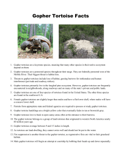 Gopher Tortoise Facts