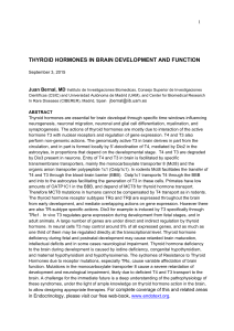 thyroid hormones in brain development and