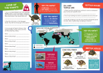 World Turtle Day booklet - Inside pages