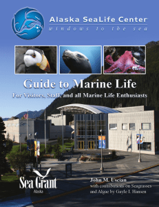 Alaska SeaLife Center Guide to Marine Life