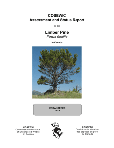 COSEWIC assessment and status report on the Limber Pine Pinus