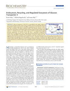Endocytosis, Recycling, and Regulated Exocytosis of Glucose