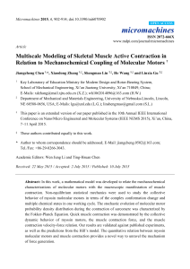 Multiscale Modeling of Skeletal Muscle Active