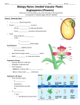 Biology Notes: Seeded Vascular Plants Angiosperms (Flowers)