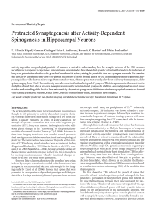 Protracted Synaptogenesis after Activity