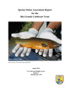 Species Status Assessment Report for the Rio Grande Cutthroat Trout