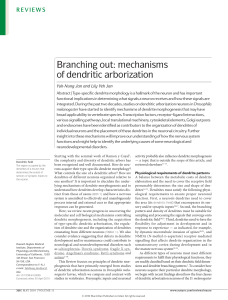 Branching out: mechanisms of dendritic arborization