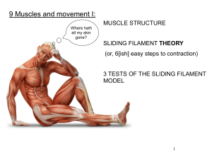 9 Muscles and movement I:
