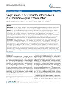 Single-stranded heteroduplex intermediates in l Red homologous