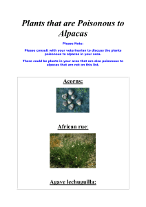 Plants That Are Poisonous To Alpacas