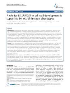 A role for BELLRINGER in cell wall development is supported by