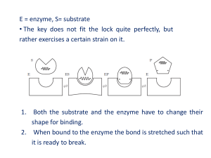 E = enzyme, S= substrate • The key does not fit the lock quite
