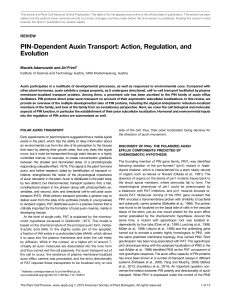 PIN-Dependent Auxin Transport: Action, Regulation