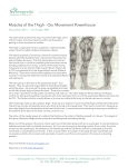 Muscles of the Thigh - Our Movement Powerhouse