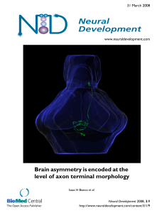 Brain asymmetry is encoded at the level of axon terminal morphology