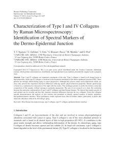 Characterization of Type I and IV Collagens by Raman