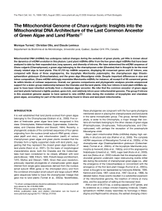 The Mitochondrial Genome of Chara vulgaris