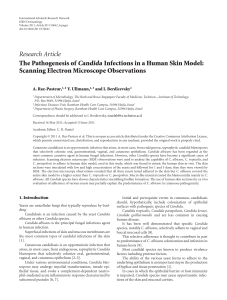 The Pathogenesis of Candida Infections in a Human Skin Model