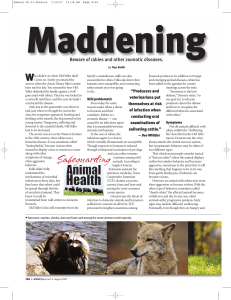 Maddening - Angus Journal