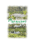 What is a mangrove
