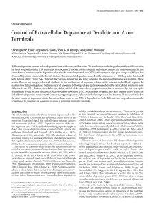 Control of Extracellular Dopamine at Dendrite and Axon Terminals