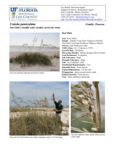 Sea Oats - Lee County Extension