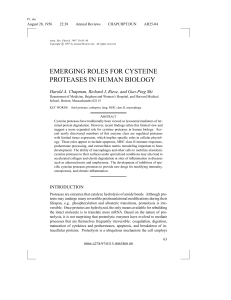 EMERGING ROLES FOR CYSTEINE PROTEASES IN HUMAN