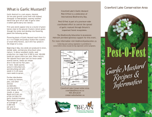 What is Garlic Mustard?
