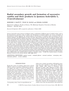 Radial secondary growth and formation of successive cambia and