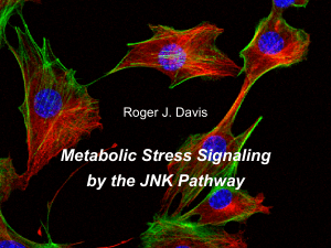 Metabolic Stress Signaling by the JNK Pathway