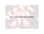 CELL CYCLES: MITOSIS AND CYTOKINESIS