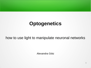 24 Optogenetics - how to use light to manipulate neuronal networks