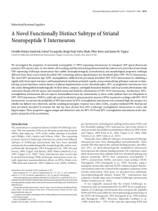 A Novel Functionally Distinct Subtype of Striatal Neuropeptide Y
