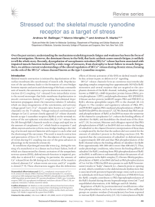 Stressed out: the skeletal muscle ryanodine receptor as a target of