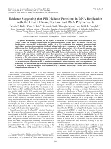 Evidence Suggesting that Pif1 Helicase Functions in DNA
