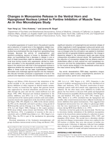Changes in Monoamine Release in the Ventral Horn and