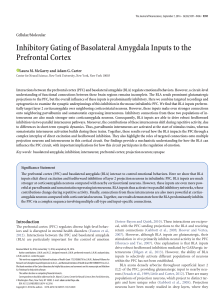 Inhibitory Gating of Basolateral Amygdala Inputs to the Prefrontal