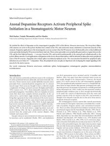 Axonal Dopamine Receptors Activate Peripheral Spike