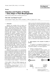 Induction and Fixation of Polarity -Early Steps in Plant Morphogenesis