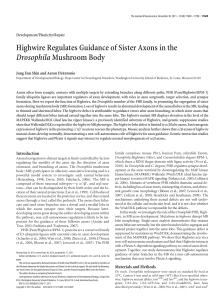 Highwire Regulates Guidance of Sister Axons in the