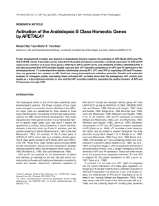 Activation of the Arabidopsis B Class Homeotic