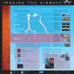 3D Modeling of a Complete Respiratory Airway for Use in