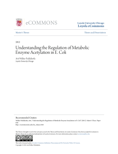 Understanding the Regulation of Metabolic Enzyme Acetylation in E