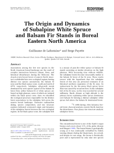 The Origin and Dynamics of Subalpine White Spruce and Balsam Fir