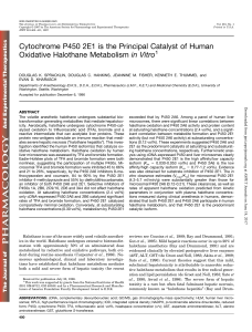 Cytochrome P450 2E1 is the Principal Catalyst of Human Oxidative