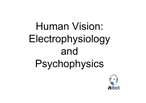 Human Vision: Electrophysiology and Psychophysics