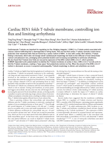 Cardiac BIN1 folds T-tubule membrane, controlling ion flux and