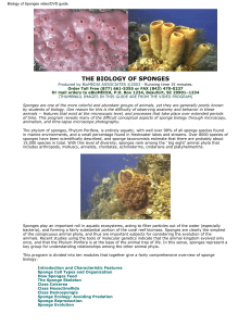 Biology of Sponges video/DVD guide.