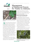 Management of Hardwood Forests for Timber in Alabama